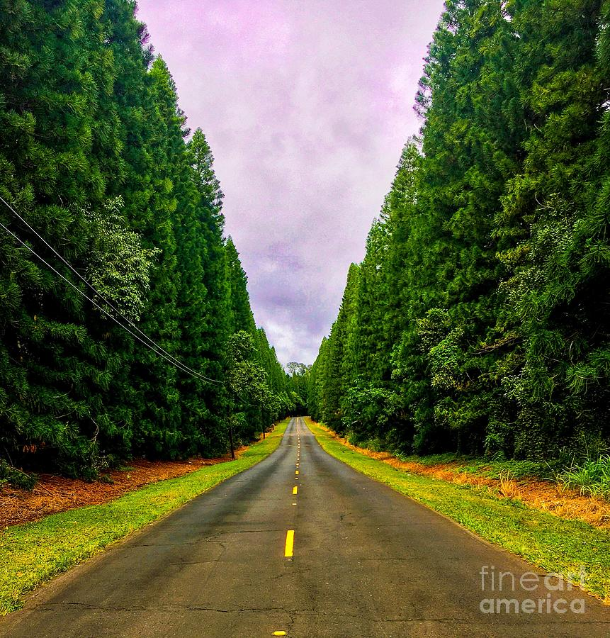 Road To Country Living Photograph