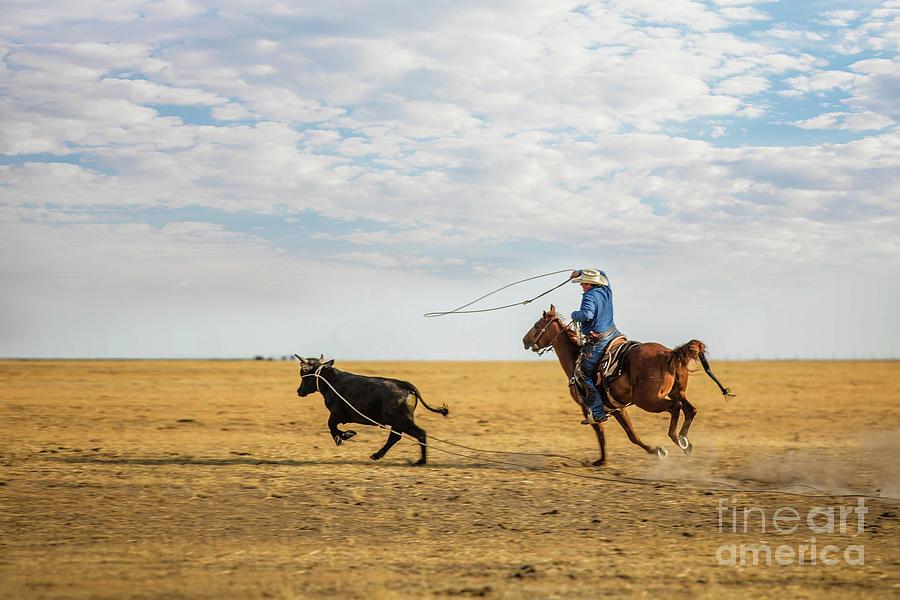 Runaway Steer Photograph
