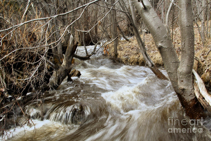 Creeks Photograph - Runoff by Roland Stanke