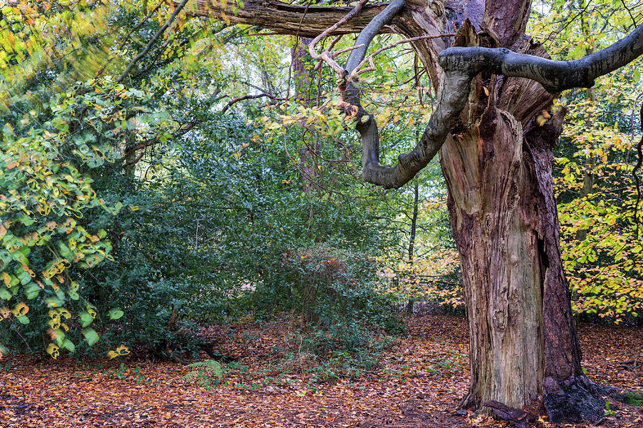 Surrey Hills Photograph - Shere common by Nick Lewis