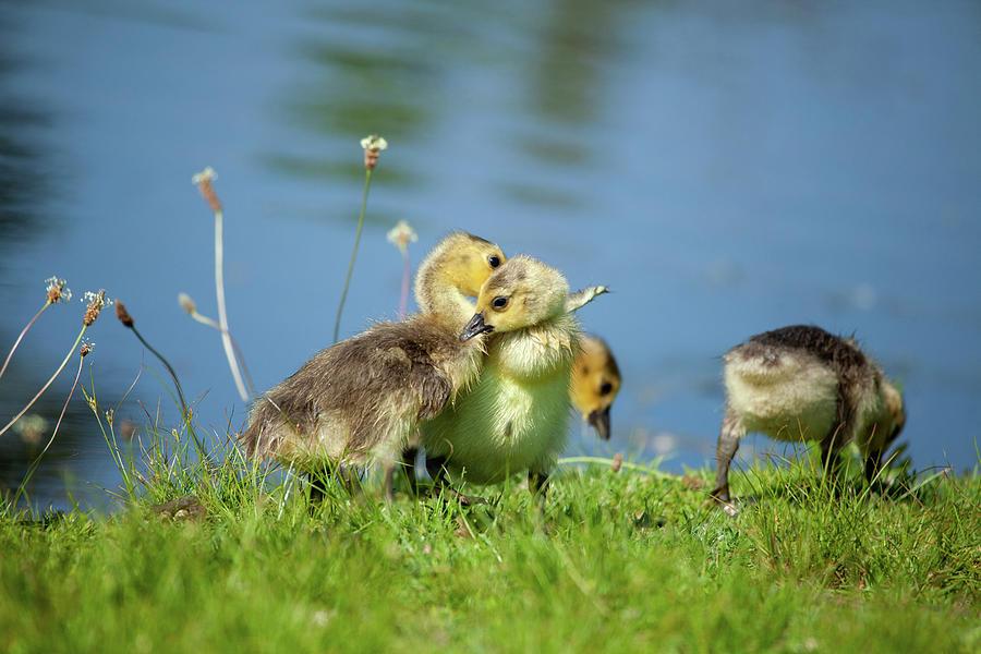 Sibling Love Photograph