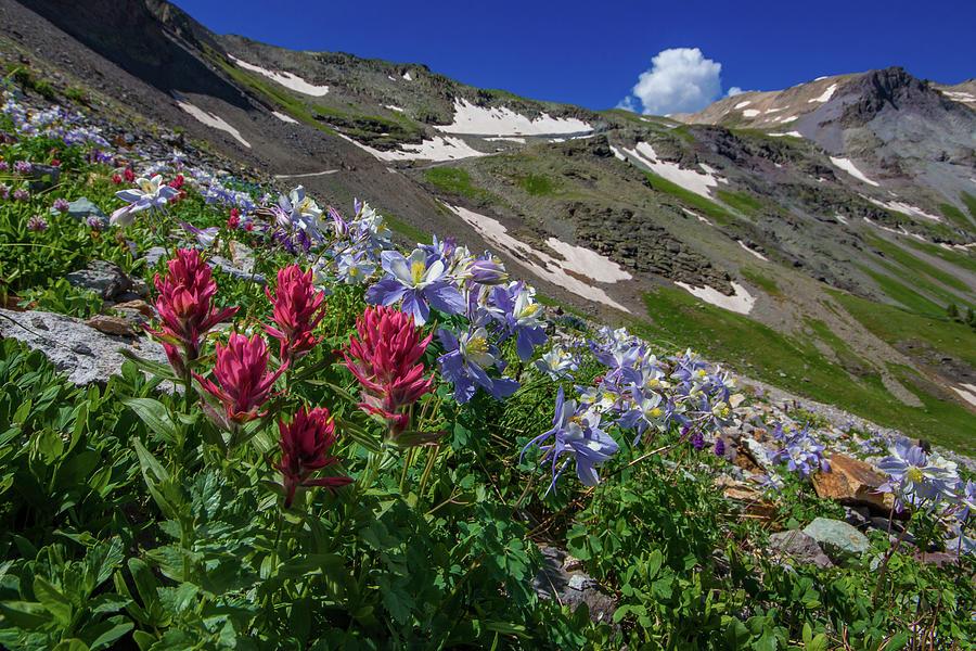 Slippery Slope Of Indian Paintbrush And Columbine Photograph