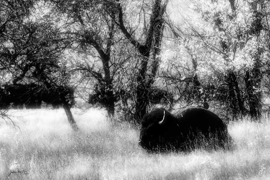 Snoozing Bison by Gerlinde Keating - Galleria GK Keating Associates Inc