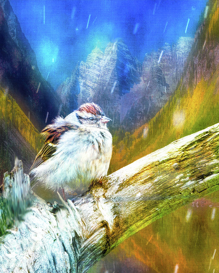 Sparrow On A Winters Day Photograph