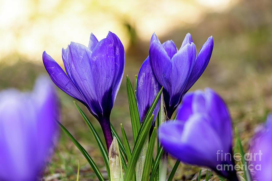 Spring Has Sprung Photograph