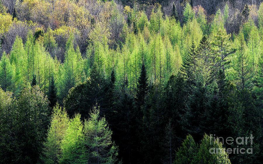 Spring Hillside Greens Photograph
