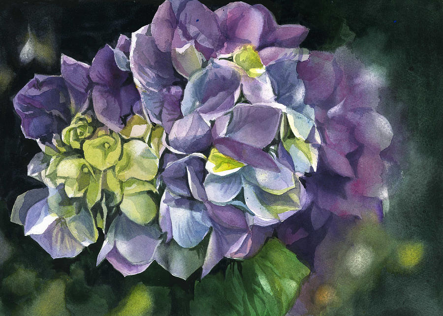spring hydrangea by Alfred Ng