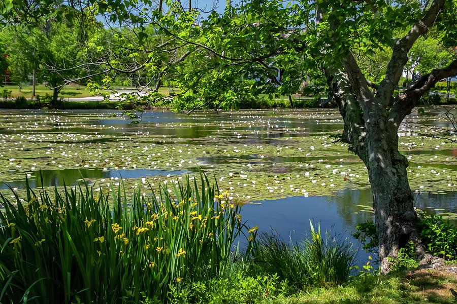 Spring Lake Photograph