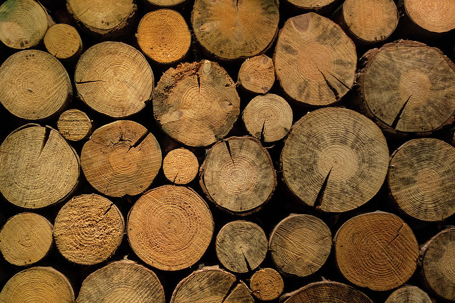 Stack Of Dried Firewood Of Birch Wood Photograph