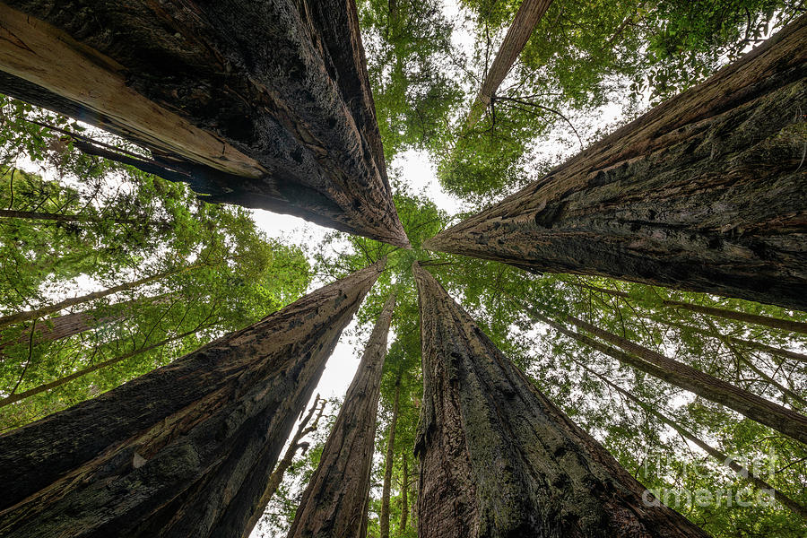 Standing Among Giants by Michael Ver Sprill