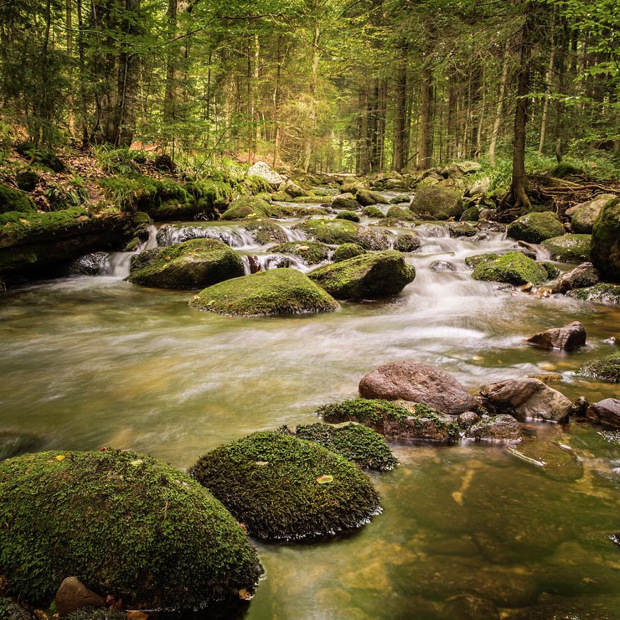 Stream In The Forest Photograph