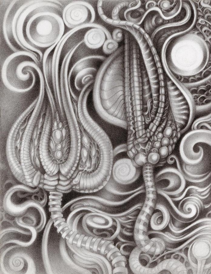 Pencil Drawing - Subterranean Garden by Kati Astraeir