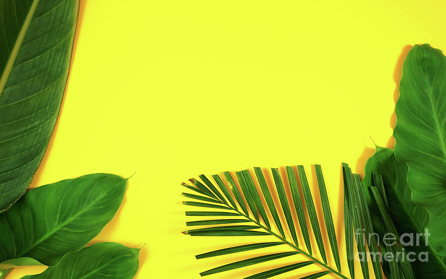 Summer Flat Lay With Tropical Leaves Palm Fronds On Bright Yellow Background Photograph By Milleflore Images If your tropical hibiscus has a few yellow leaves here and there, it's nothing to worry about, as the plants regularly renew their. summer flat lay with tropical leaves palm fronds on bright yellow background by milleflore images