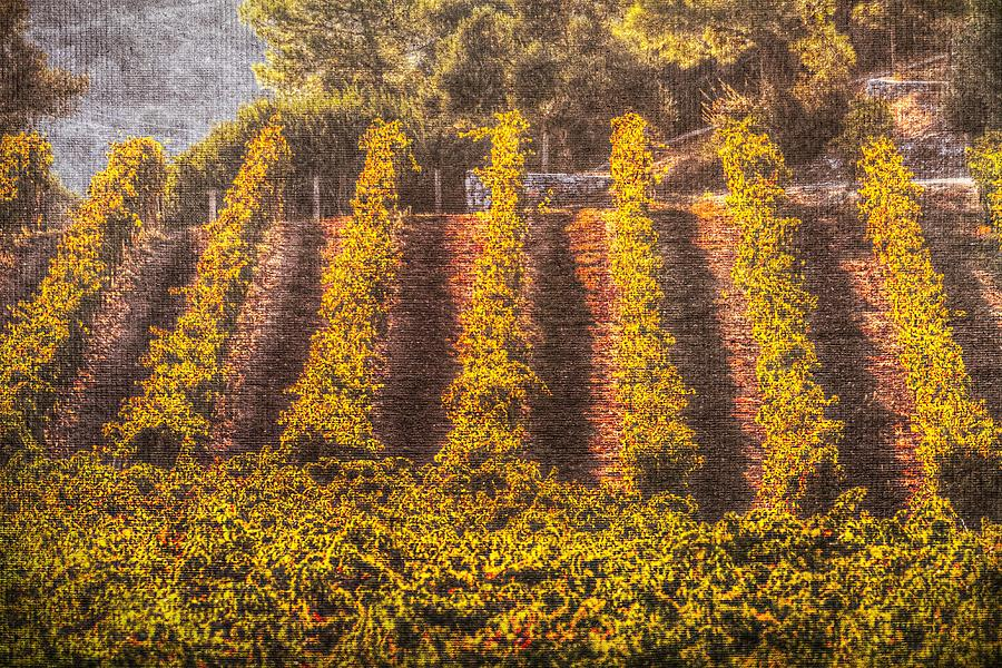 Summer Vineyard Canvas Texture by David Pyatt