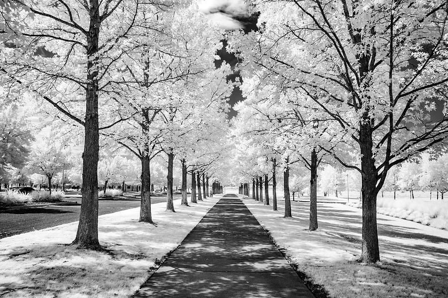 Sunny Path by Harold Carlson