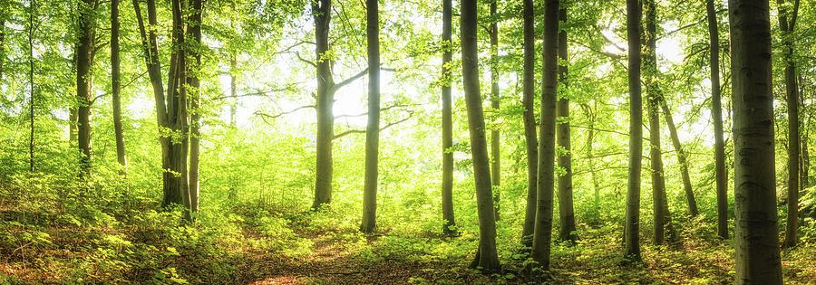 Sunny Trees Photograph