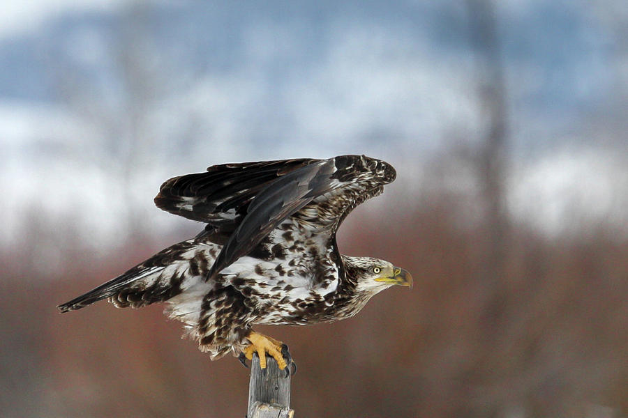 Take Off by Ronnie and Frances Howard