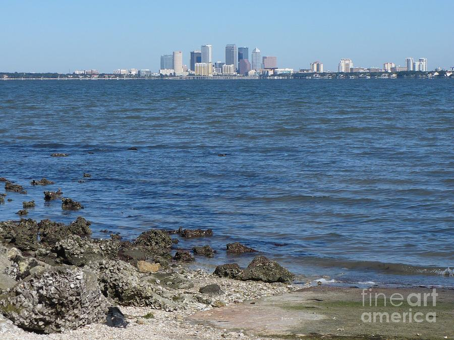 Tampa Skyline from Ballast Point by Carol Groenen
