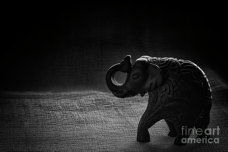 The Elephant Photograph