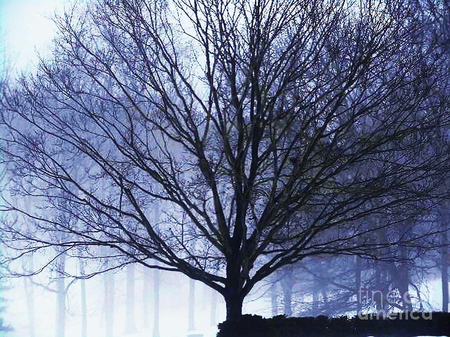 The Healing Tree Photograph