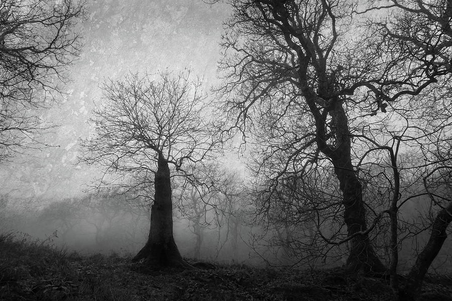 The Witches Tree Photograph