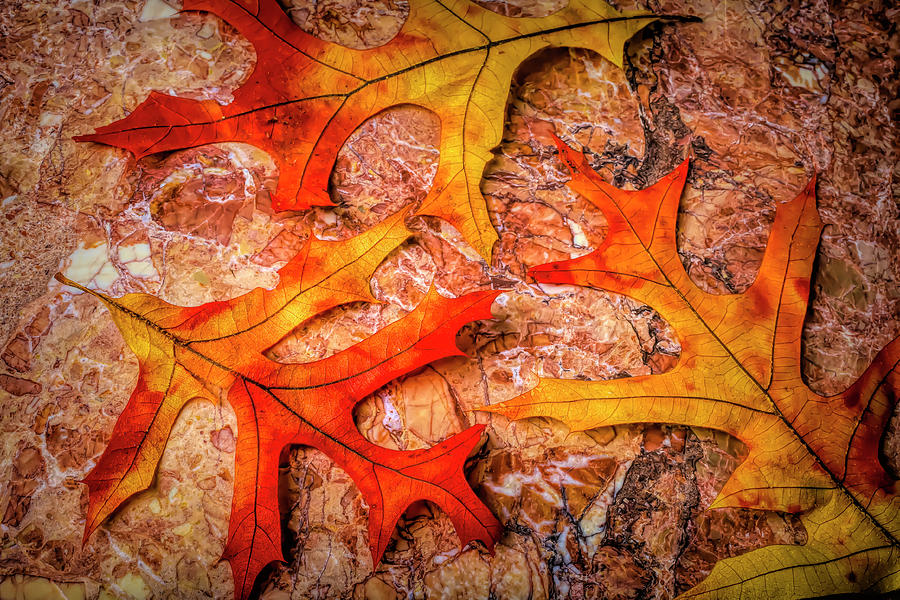 Three Autumn Leaves by Garry Gay