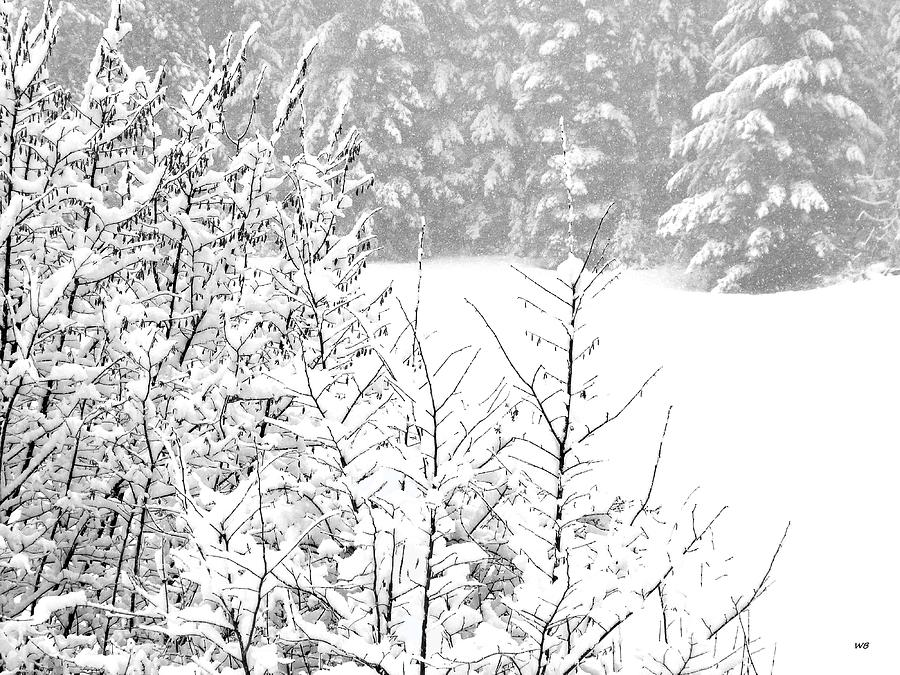 Tranquil Snowfall by Will Borden