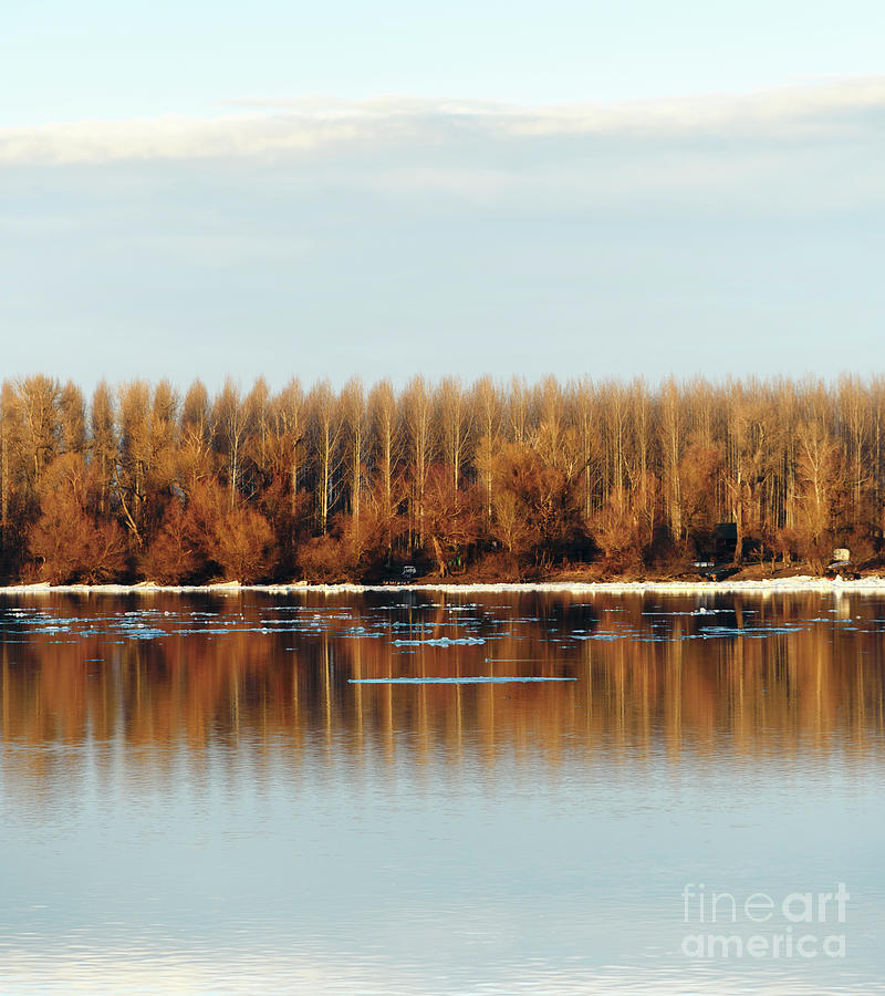 Trees reflected in water by Jelena Jovanovic