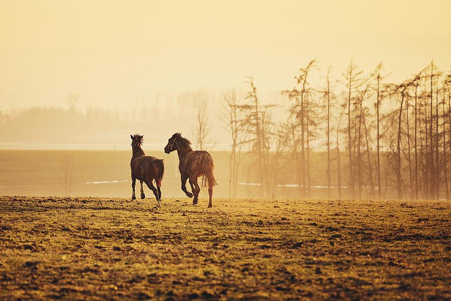Horse Photograph - Two Horses At Sunset 1 by Jaromir Chalabala