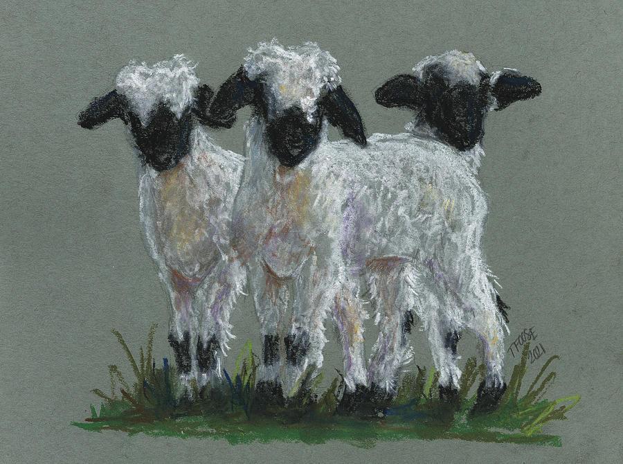Valais Blacknose Lambs Painting