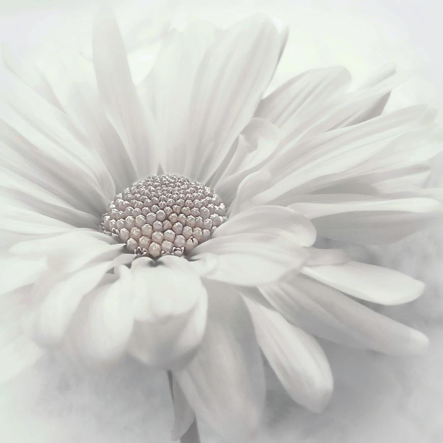 Vanilla Ice update by Darlene Kwiatkowski