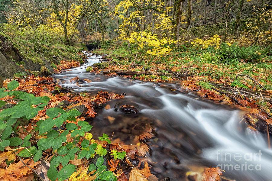 Wahkeena Autumn by Mike Dawson