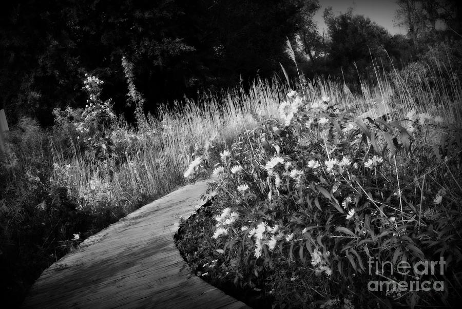 Black And White Photograph - Wetlands Wonder - Black and White by Frank J Casella