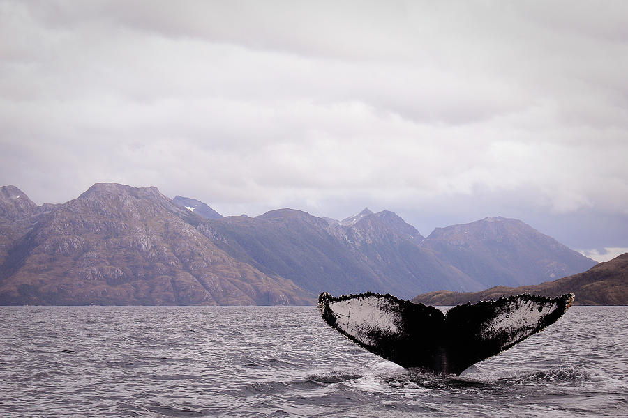 Whale Watching Photograph