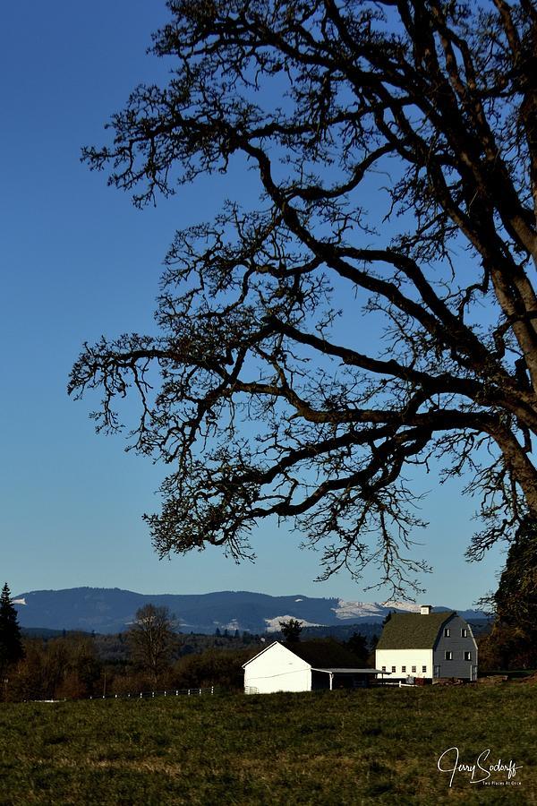 White Barn Tree by Jerry Sodorff