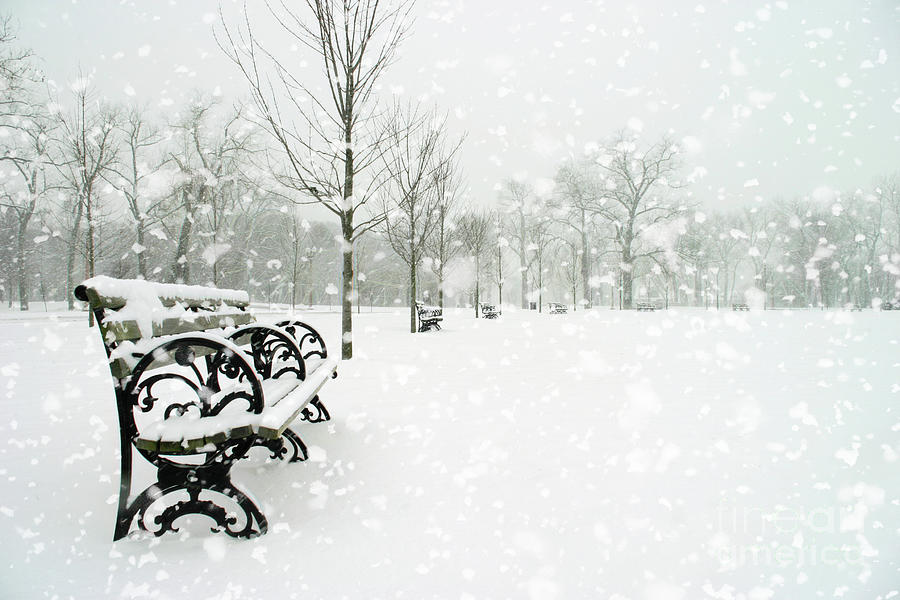 Forest Park Digital Art - White Blanket Bench by Chris Mautz