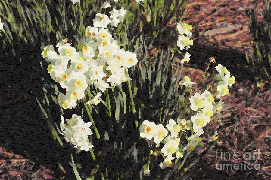 Narcissus Photograph