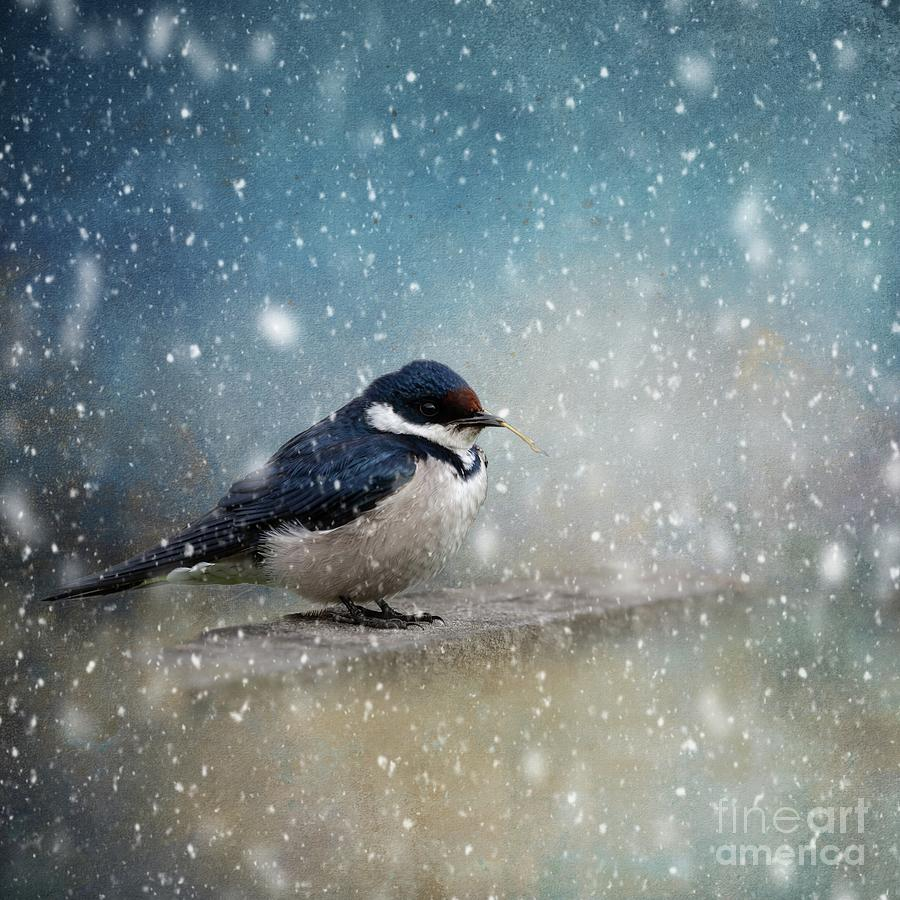 Winter Bird by Eva Lechner