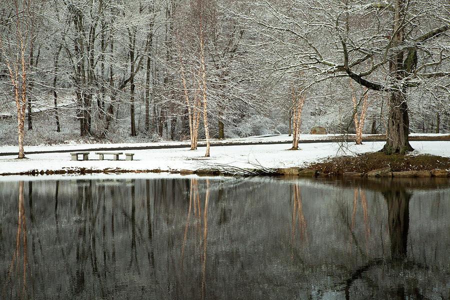Winter Still by Karol Livote