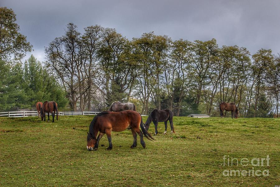 1035 - Delano Ponies by Sheryl L Sutter