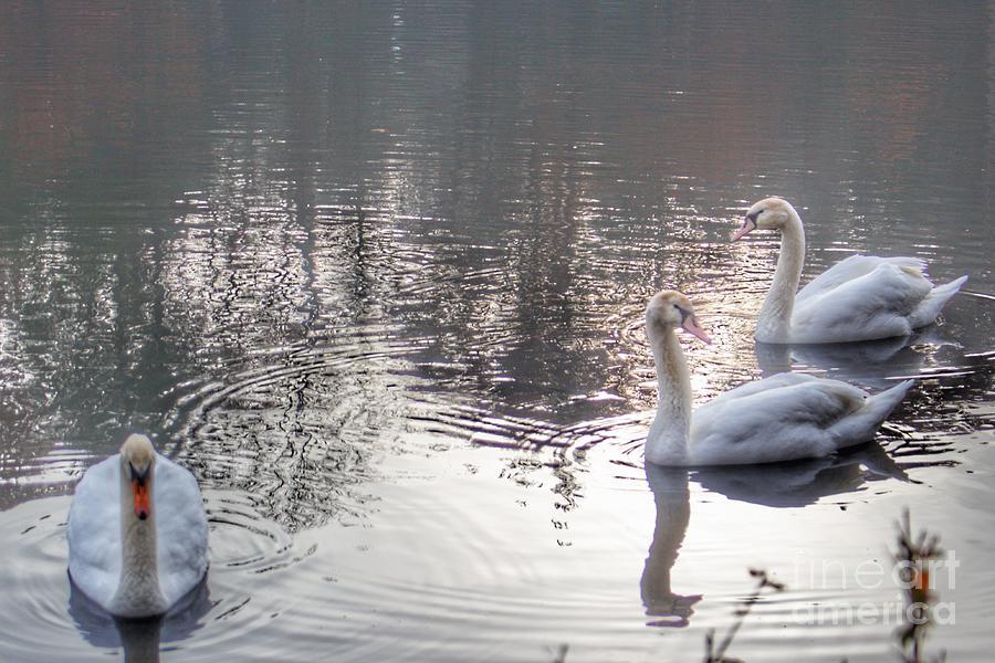 1038 - Geese of Duck Lake II  by Sheryl L Sutter