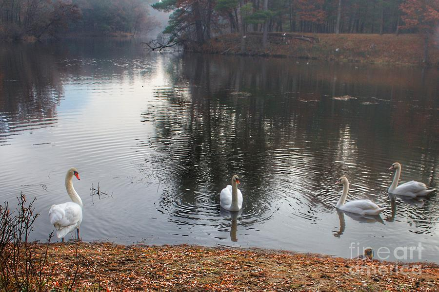1040 - Geese of Duck Lake IV by Sheryl L Sutter