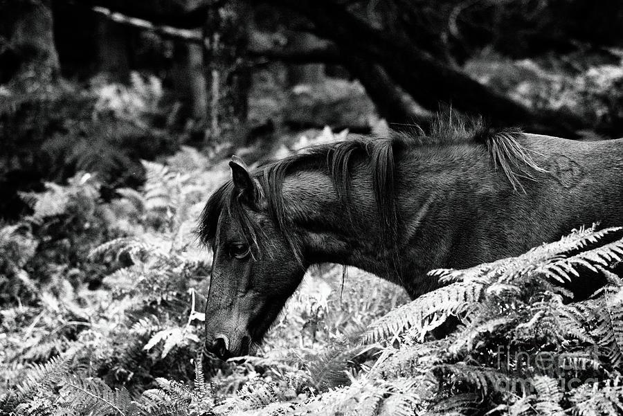 Animal Photograph - Fine Art Wild Horse in Black and White by Toula Mavridou-Messer