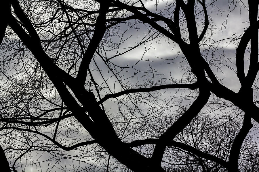 Winter Trees Sky and Clouds by Robert Ullmann