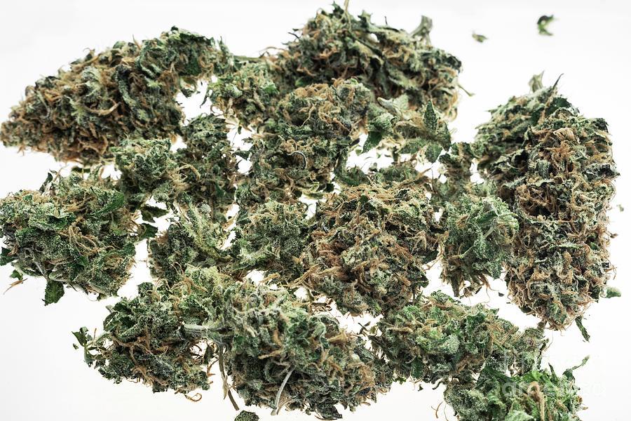 Medical Marijuana Cannabis Buds Closeup On White Studio Backgrou Photograph