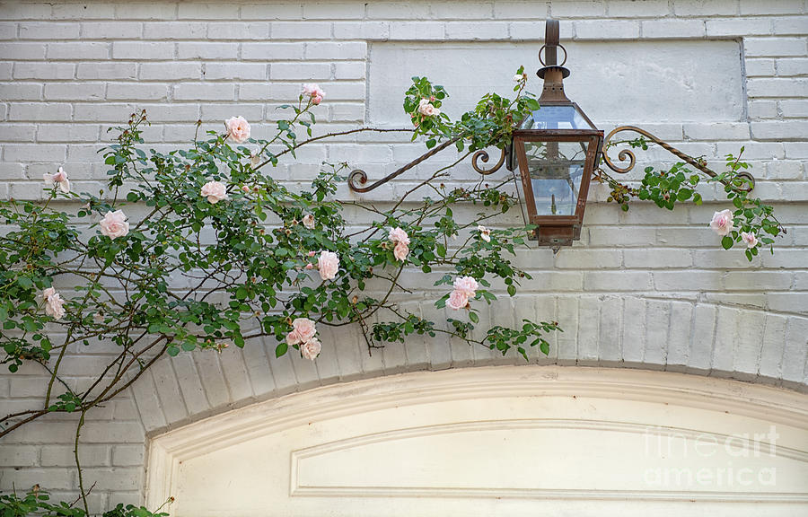 Climbing Roses Over Garage Photograph