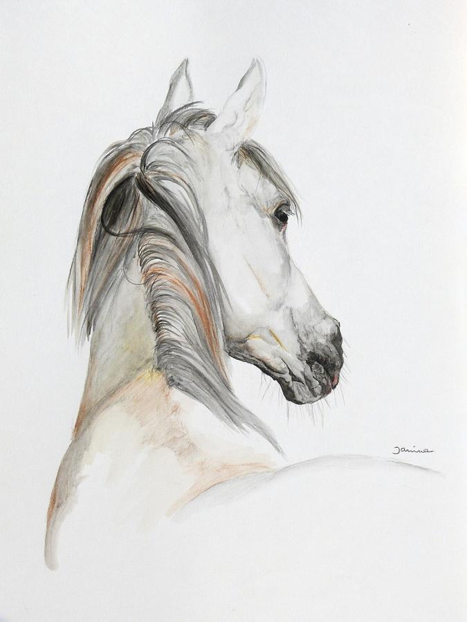 Janina Painting - Ansata El Naseri by Janina  Suuronen