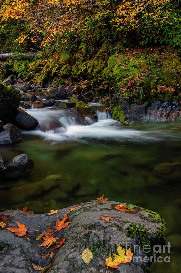 Autumn Clear Photograph