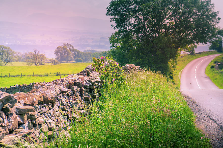 curved road in middle of rural Engalnd with dry stone walls and trees Photograph