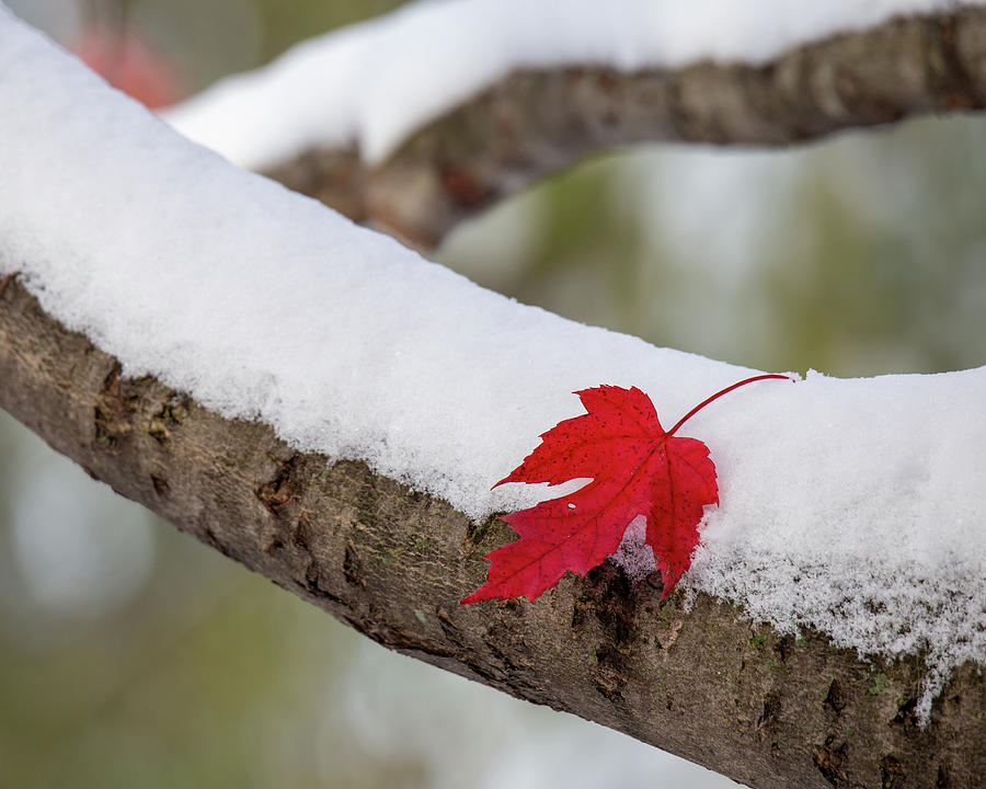Fall and Winter by Lauri Novak